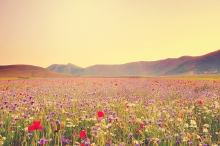 Field Of Wild Flowers Wallpaper for Android, iPhone and iPad