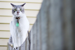 Green-Eyed Cat On Fence Wallpaper for Android, iPhone and iPad