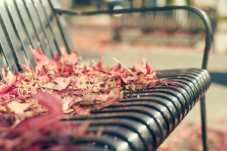 Macro autumn bench Background for Android, iPhone and iPad