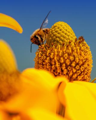 Honey bee - Obrázkek zdarma pro iPhone 5C