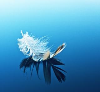Feather On Blue Surface - Obrázkek zdarma pro 1024x1024