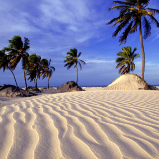 Bahia Beach Resorts Puerto Rico - Obrázkek zdarma pro iPad mini