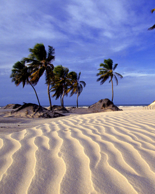 Bahia Beach Resorts Puerto Rico - Obrázkek zdarma pro Nokia Lumia 505