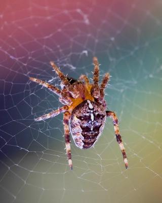 Spider on a Rainbow - Obrázkek zdarma pro Nokia Lumia 920