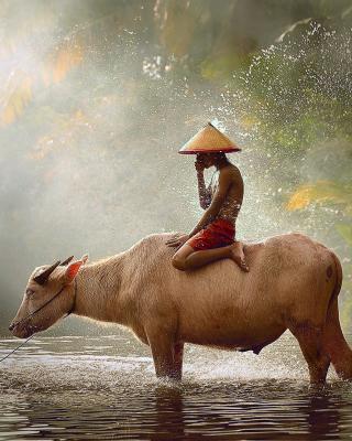 Holy Cow Animal - Obrázkek zdarma pro Nokia 206 Asha