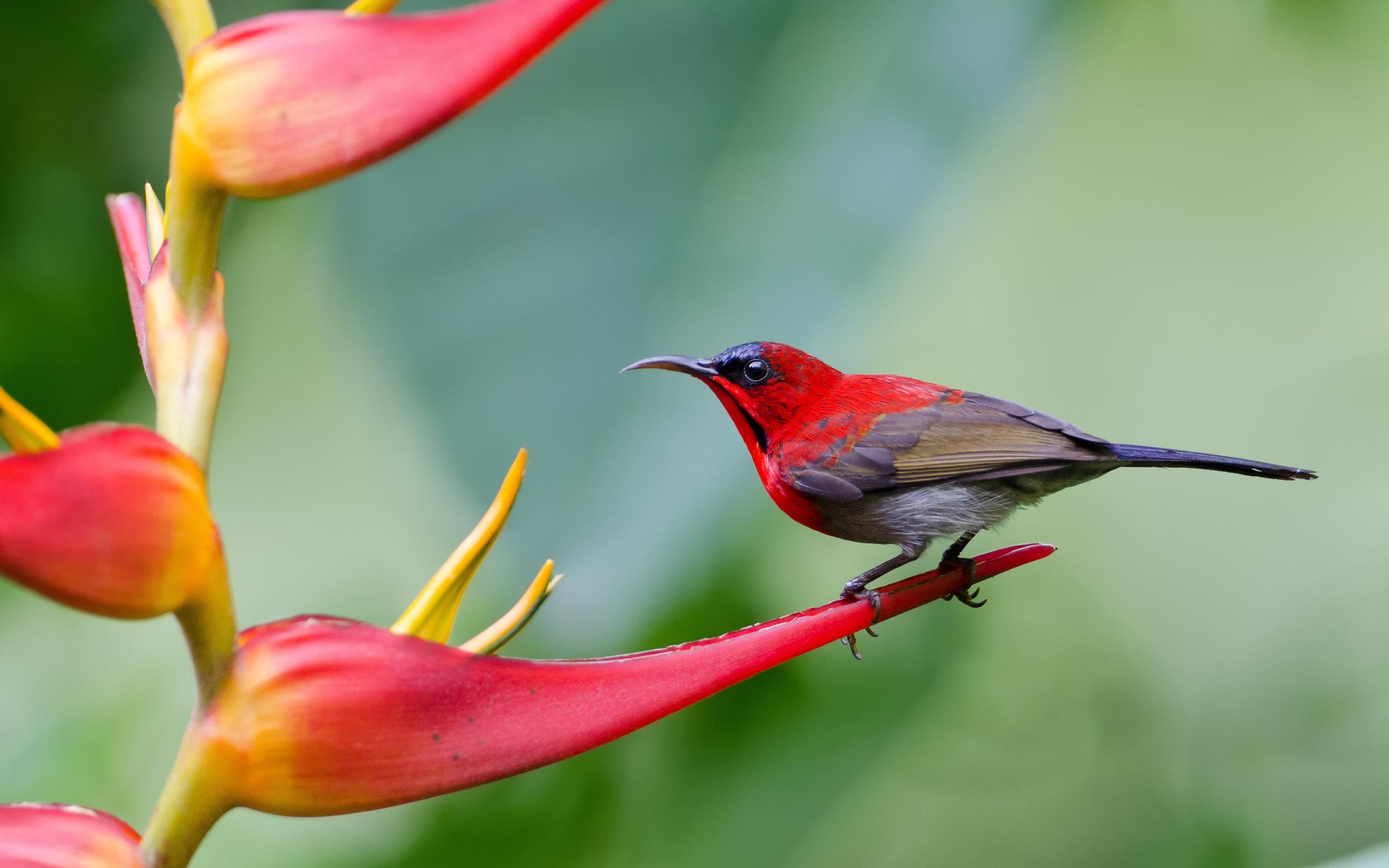природа животные птица nature animals bird  № 2036870 загрузить