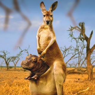 Kangaroo and Hippopotamus - Obrázkek zdarma pro iPad Air