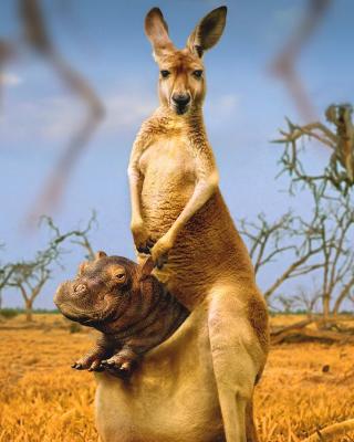 Kangaroo and Hippopotamus - Obrázkek zdarma pro Nokia C2-06