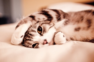 Funny Lazy Cat Background for Android, iPhone and iPad