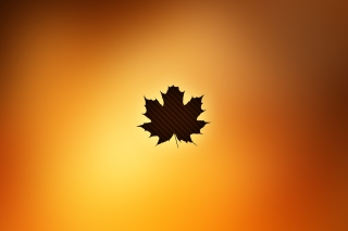 Oak Leaf Picture for Android, iPhone and iPad