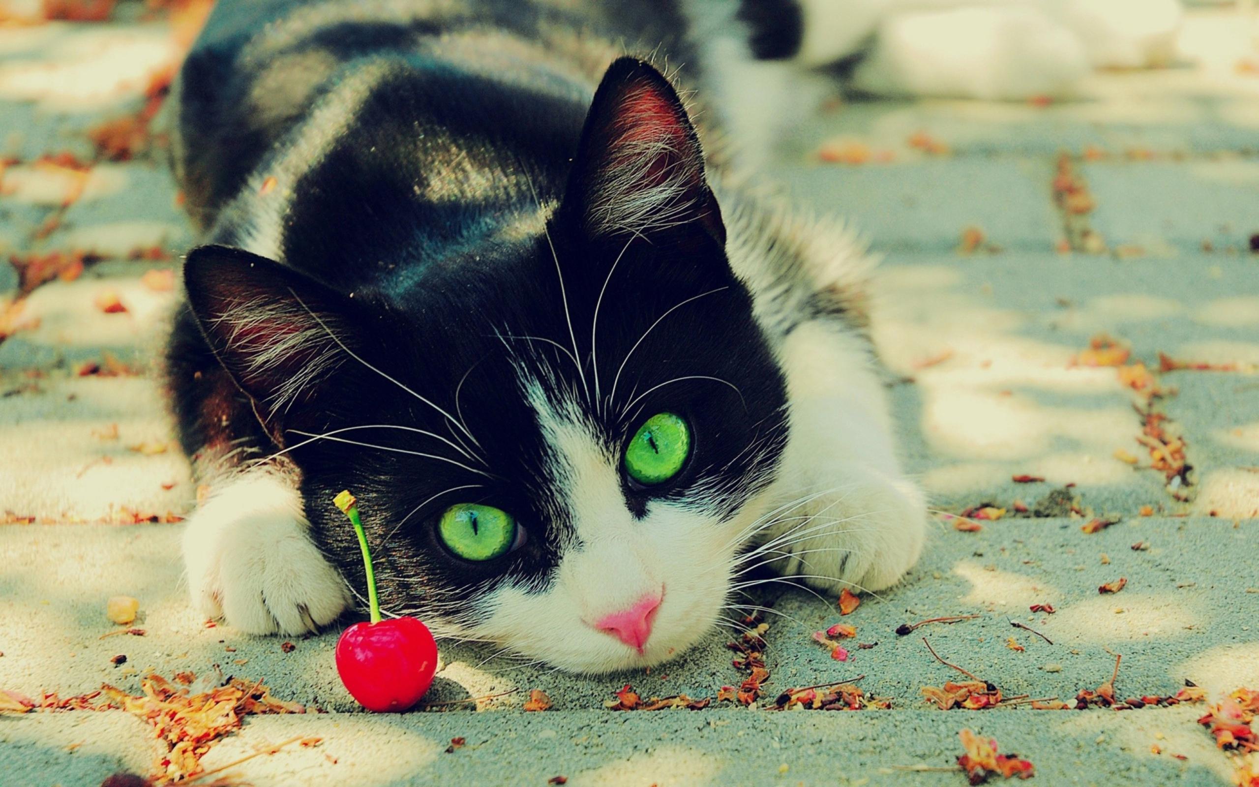 природа животные кот котенок черный  № 654466 без смс