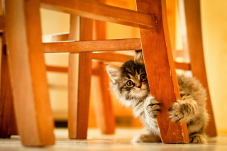 Kitten Hiding Behind Chair Leg Picture for Android, iPhone and iPad