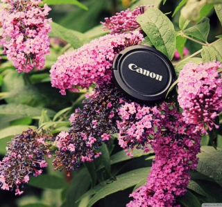 Canon Cap - Obrázkek zdarma pro iPad 3