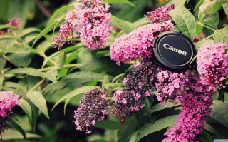 Canon Cap - Obrázkek zdarma pro LG Optimus M