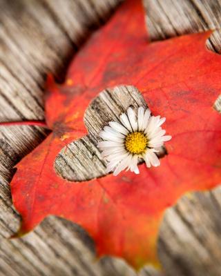 Macro Leaf and Flower - Obrázkek zdarma pro Nokia Asha 308