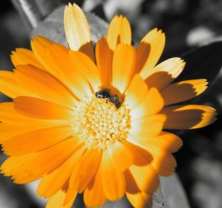 Golden Flower - Obrázkek zdarma pro 2048x2048