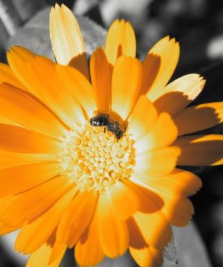 Golden Flower - Obrázkek zdarma pro Nokia Asha 305