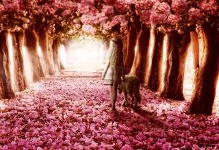 Flower Forest - Obrázkek zdarma pro Fullscreen Desktop 800x600