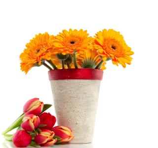 Gerbera Flowers Bouquet - Obrázkek zdarma pro 2048x2048