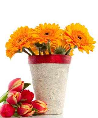 Gerbera Flowers Bouquet - Obrázkek zdarma pro Nokia Asha 305