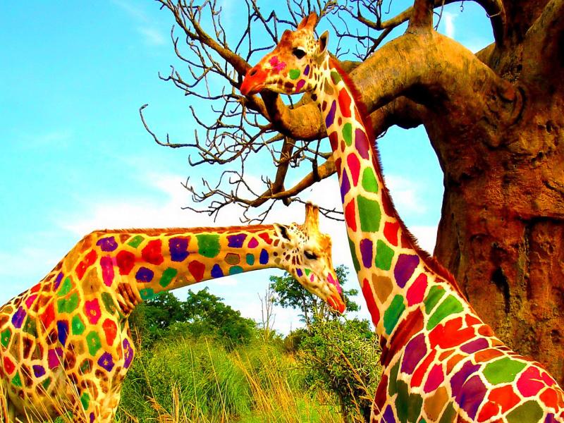 Фото жираф