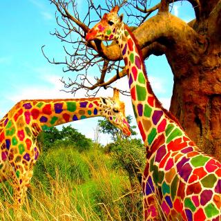 Multicolored Giraffe Family - Obrázkek zdarma pro 128x128