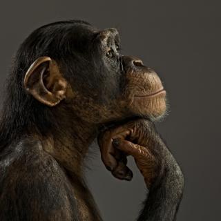Chimpanzee Modeling - Obrázkek zdarma pro 208x208