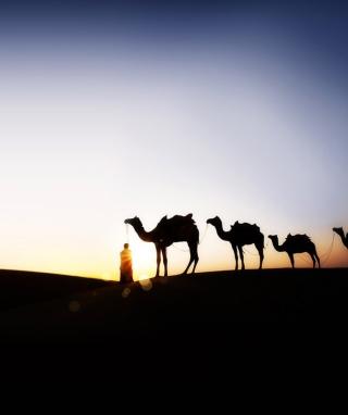 Camel At Sunset - Obrázkek zdarma pro Nokia Lumia 610