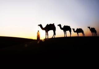 Camel At Sunset - Obrázkek zdarma pro Android 1280x960