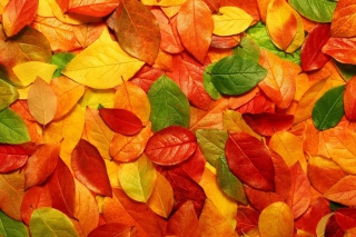 Autumn Leaves Rug Picture for Android, iPhone and iPad
