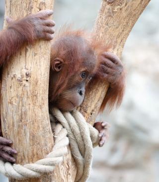 Cute Little Monkey In Zoo - Obrázkek zdarma pro Nokia X2-02