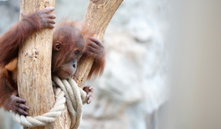 Free Cute Little Monkey In Zoo Picture for Android, iPhone and iPad