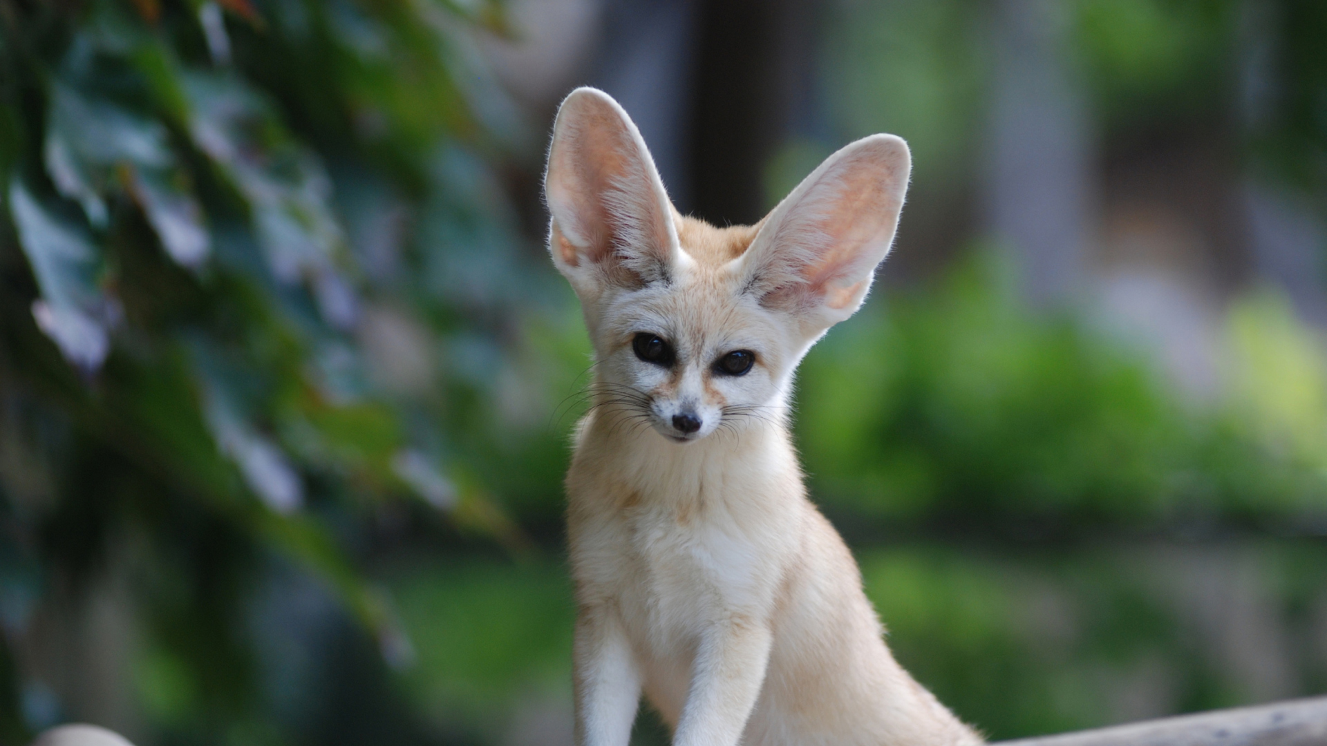 Animals with big ears pictures Long Ears Images Pixabay Download Free Pictures