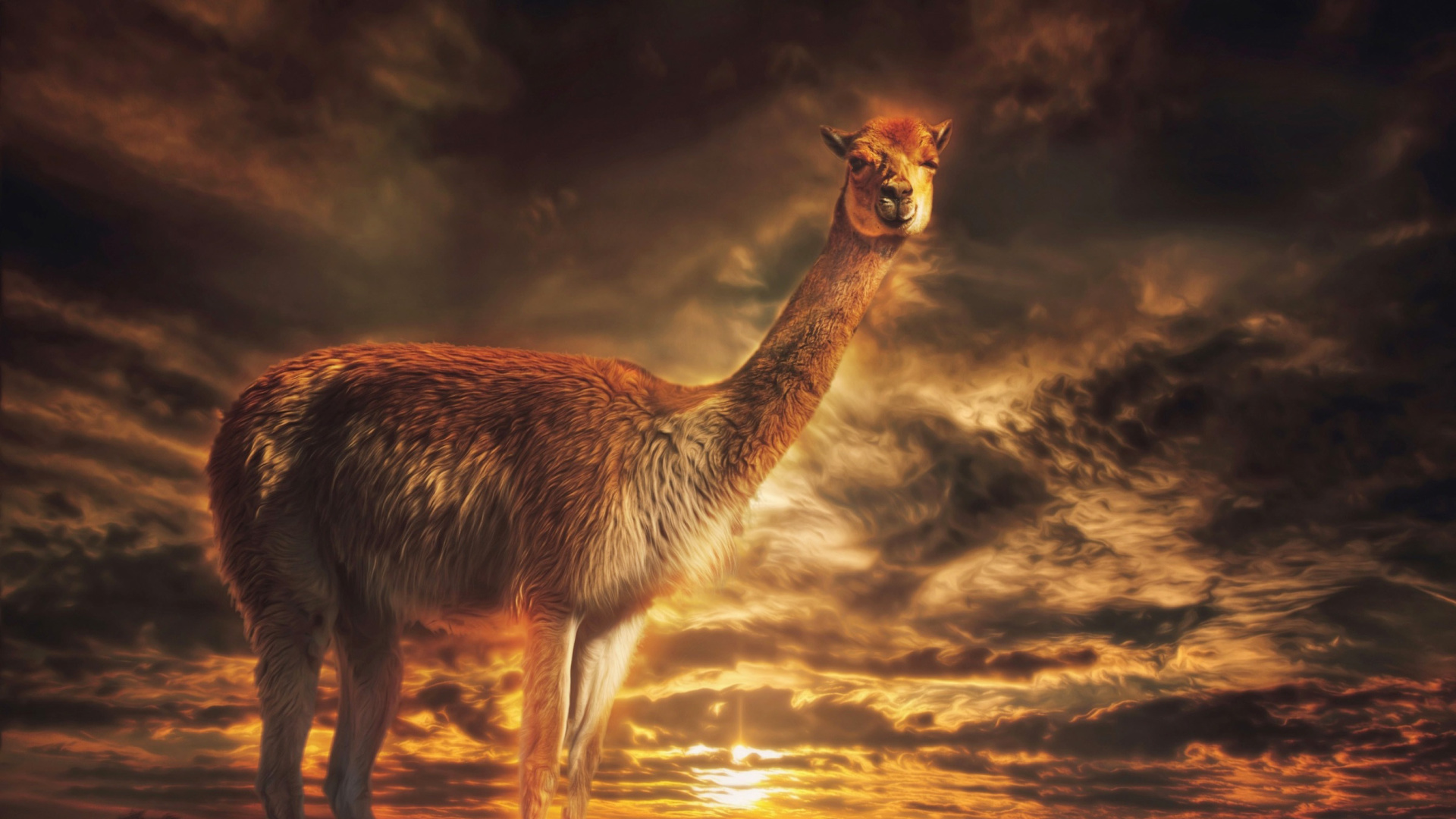 Llama Wallpaper For Desktop 1920x1080 Full HD