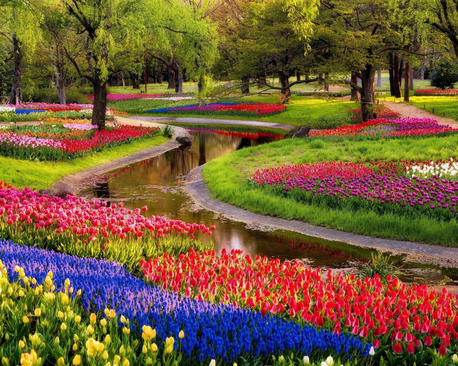 Цветы парки на рабочий стол