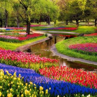 Tulips and Muscari Spring Park - Obrázkek zdarma pro 128x128