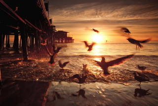 Seagulls In California Beach Wallpaper for Android, iPhone and iPad