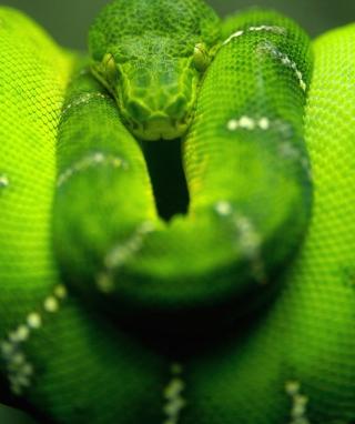 Tree Snake On Branch - Obrázkek zdarma pro Nokia X1-00