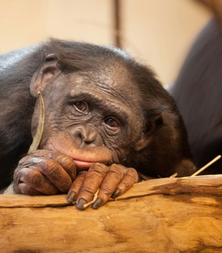 Sad Monkey - Obrázkek zdarma pro 480x640