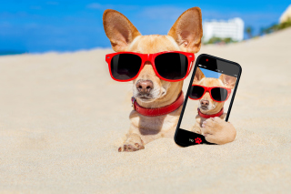 Chihuahua with mobile phone Background for Android, iPhone and iPad