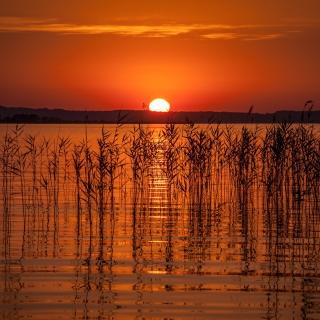 Summer Red Sunset - Obrázkek zdarma pro iPad