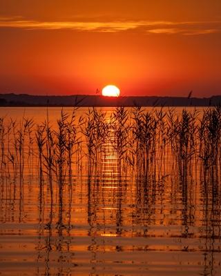 Summer Red Sunset - Obrázkek zdarma pro Nokia Asha 202