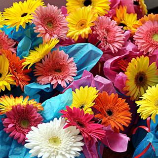 Bouquet of Gerberas - Obrázkek zdarma pro 2048x2048