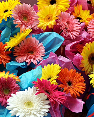 Bouquet of Gerberas - Obrázkek zdarma pro 360x480