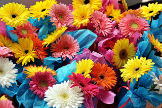 Bouquet of Gerberas Wallpaper for Android, iPhone and iPad