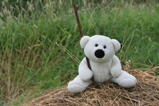 White Teddy Bear Picture for Android, iPhone and iPad