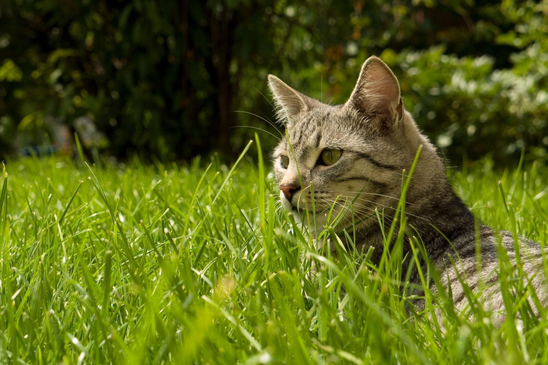 Котенок на траве  № 2959635 загрузить