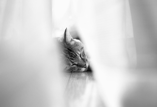 Sleepy Grey Cat Background for Android, iPhone and iPad