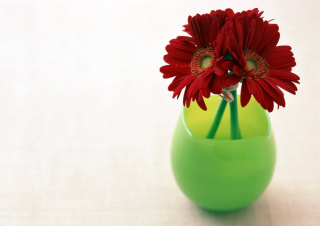 Gerbera In Vase Picture for Android, iPhone and iPad