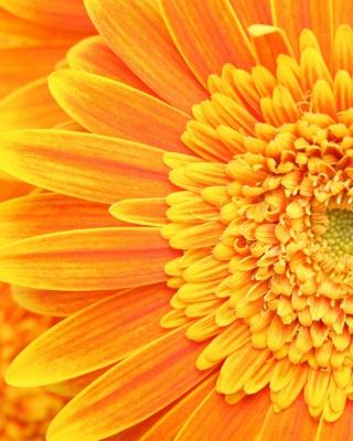 Amazing Orange Gerbera - Obrázkek zdarma pro Nokia Asha 308